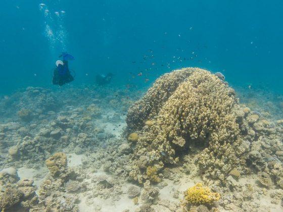Fondo marino del mar Rojo en las costas de Jordania