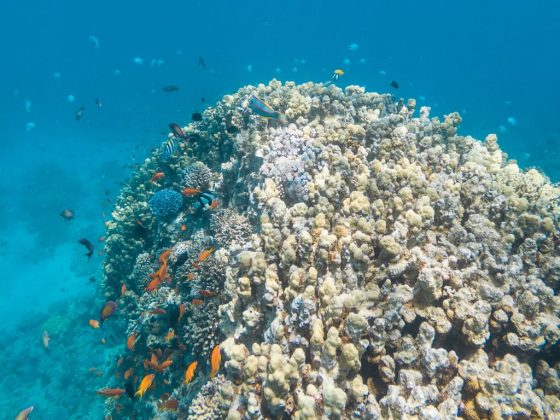 Corales en el japanse garden de Jordania