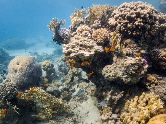 Snorkel en first bay, en las costas de Aqaba, Jordania