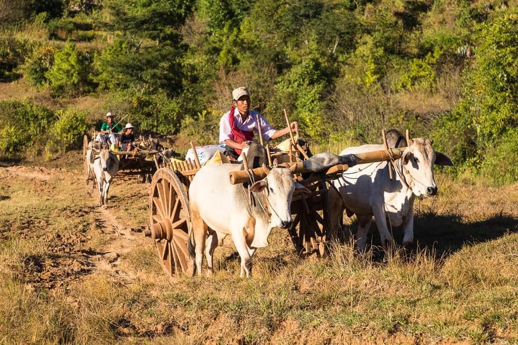 Carros de los agricultores birmanos