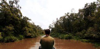 Jungla de Borneo (Indonesia), donde el turismo se convierte en una alternativa a la explotación forestal
