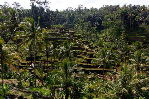 Arrozales de Tegalalan (Bali, Indonesia)