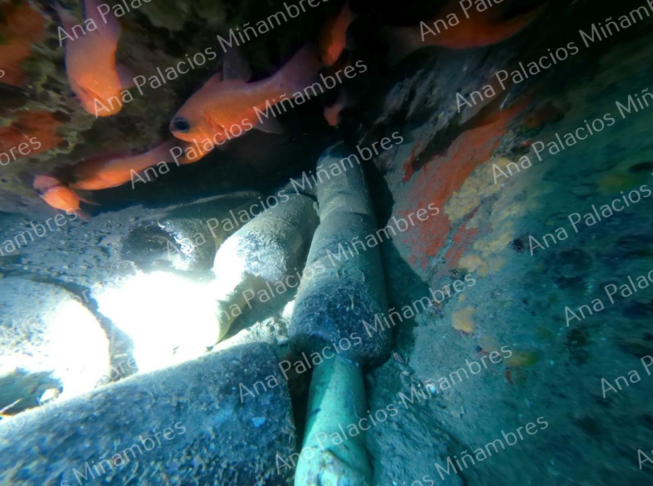 Instantes previos a la extracción de las botellas después de 6 meses bajo el mar